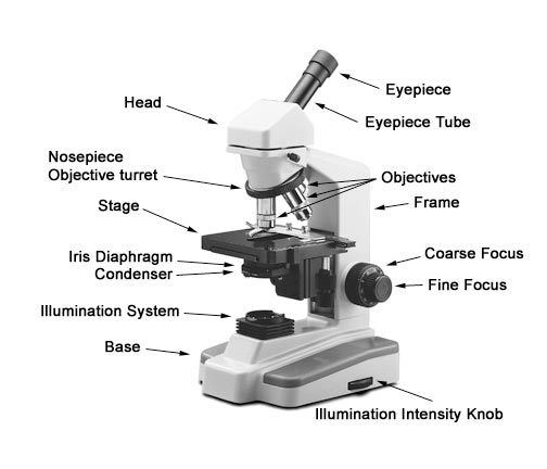 labeled  compound microscope